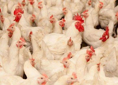تولید فراورده های گوشتی